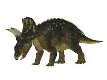 Nedoceratops Royalty Free Stock Images