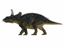 Nedoceratops Side Profile Royalty Free Stock Photos