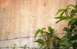 Nedsmutsad husvägg för Grunge med gröna växter Arkivbilder