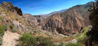 Nedstigningen till den Colca kanjonen i sydliga Peru Royaltyfria Foton
