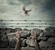 Need forgiveness. Man arms on a stone wall fence background with barbed wire on top as a convict in a prison rise hands to the sky on a flying pigeon. Need stock photos