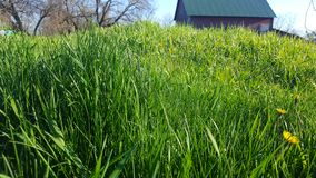 Need to mow the lawn. Tall grass and weeds. Needs lawn care Royalty Free Stock Images