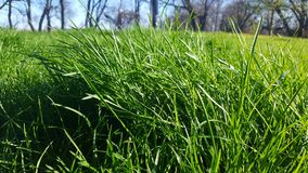 Need to mow the lawn. Tall grass and weeds. Needs lawn care Stock Photos