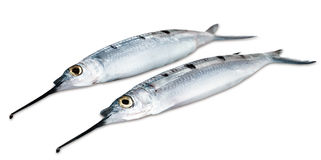 Needle-fish Royalty Free Stock Photo