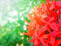 Needle flower, flower, beautiful, beautiful color, multicolored, in the garden, resting, free stock photography