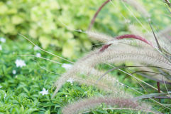 Needle Grass have blur green plant as background Stock Photos