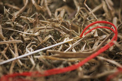 Needle in the hay. Great stuff-needle with red thread in the haystack royalty free stock image