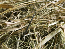 Needle in a haystack. Problems and achievement Royalty Free Stock Images