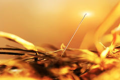 Needle in a haystack. Close-up Stock Images