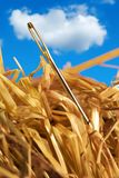 Needle in a haystack. Close-up of a needle in a hay Stock Photos