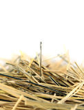 Needle in a haystack. A single needle in a haystack. Focus is on the top of the needle head Royalty Free Stock Photo