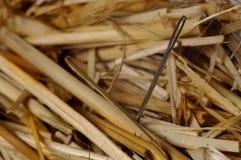 Needle in a haystack. Macro of needle in a haystack Stock Photos