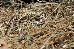Needle in a Haystack Stock Photography