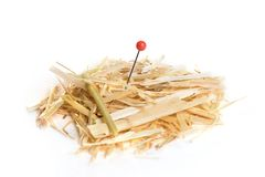 Needle in haystack Stock Photo