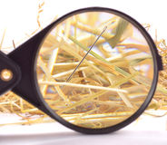 Needle in haystack. With magnifying glass on white background Stock Photos