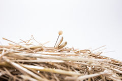 A needle is in the haystack. Proverb for challenge and search Stock Images