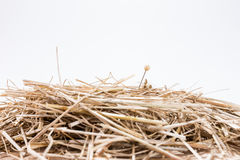 A needle is in the haystack. Proverb for challenge and search Royalty Free Stock Images