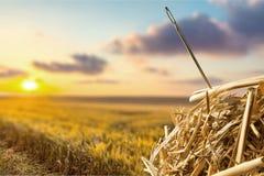 Needle in a Haystack. Searching Haystack Needle Hay Ideas Concepts Royalty Free Stock Photo