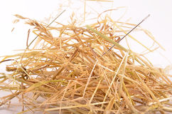 Needle in haystack. On white background Stock Images