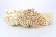 Needle mushrooms   Stock Image