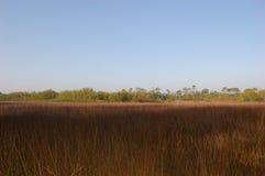 Needlerush Marsh. A typical needlerush marsh environment at the Charlotte Harbor Environmental Center royalty free stock image