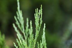 Needles Stock Images