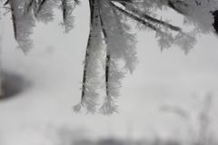 Needles ate in the snow. sticky snowflakes Royalty Free Stock Photos