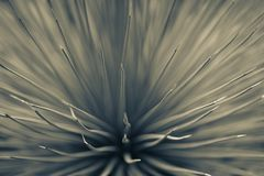 Needles and stems of cactus.  toning Royalty Free Stock Photography