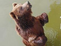 Neeed& x27 dell'orso; libertà di s Fotografia Stock Libera da Diritti