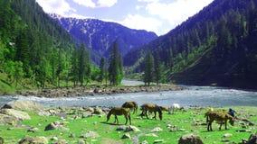 Neelum Valley Kashmir Paquistão Imagens de Stock Royalty Free