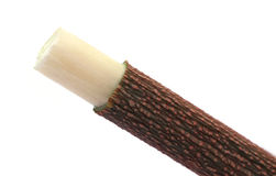Neem作为草本牙刷的枝杈用途 免版税库存图片