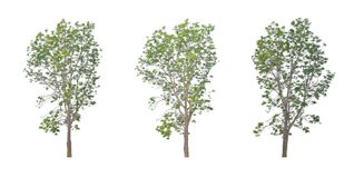 Neem叶子是灌木是美丽的 库存图片