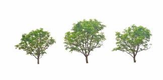 Neem叶子是灌木是美丽的 库存照片