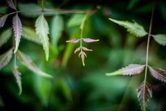 Neem дерева поступок рожденных лист заново естественный стоковое изображение rf