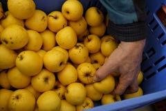 Neem appelen van de doos Royalty-vrije Stock Foto