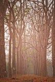 Neem-Baum Lizenzfreie Stockfotografie