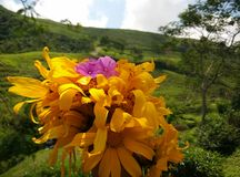 Neem bloemen met onduidelijk beeld achtergrondvoorwerpen stock fotografie