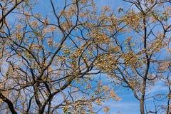 Neem drzewo fotografia stock