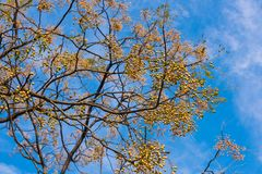 Neem drzewo zdjęcie royalty free