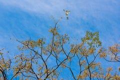 Neem drzewo fotografia royalty free