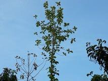 Neem een blik bij de bladeren met een lange boom in de blauwe hemel royalty-vrije stock afbeelding
