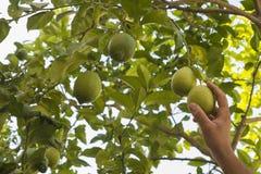 Neem een citroen met uw hand Stock Fotografie