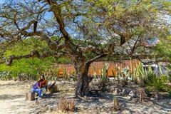 Neem een pauze onder boomschaduw in Mitla royalty-vrije stock foto's
