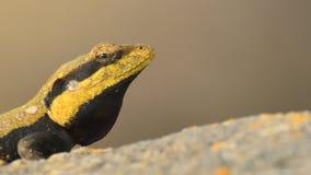 Neem heimelijk in: Peninsulaire rotsagama royalty-vrije stock foto's