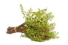 Neem indica blad-Azadirachta Royalty-vrije Stock Foto's