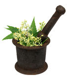 Neem leaves and flower on a vintage mortar Stock Image