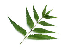 Neem leaves Stock Image