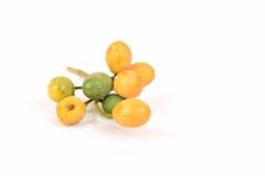 Neem, Neem Tree, Nim, Margosa, Quinine, Holy tree, Indian Margosa Tree, Pride of china, Siamese Neem Tree. Stock Photo