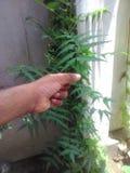 Neem små växter arkivbild
