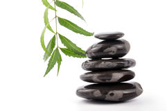 Neem spa Royalty Free Stock Photography